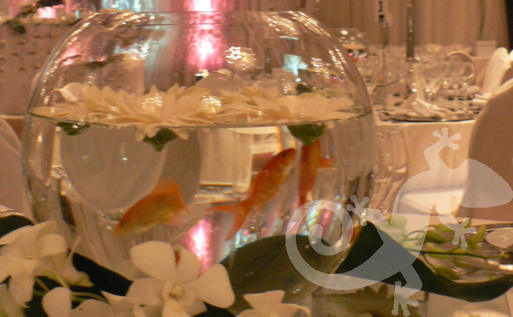 Glass fish bowl centrepiece,tropical orchids, youthful wedding design